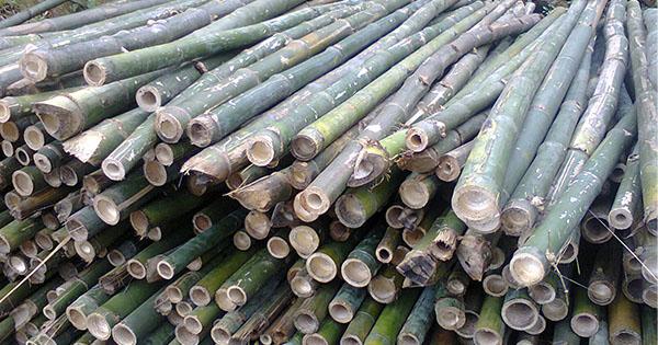 quy-trinh-bien-phap-thi-cong-coc-tre-hosoxaydung.vn